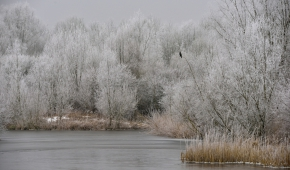 Horsterwold winterlandschap